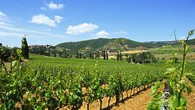 Rotweine aus der Toskana