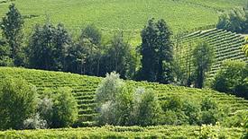 Weitere italienische Rotwein-Regionen