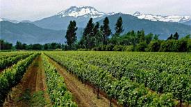 Chilenischer Rotwein