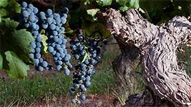 Mittelkräftige Rotweine