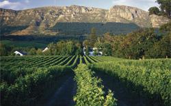 Rotweine aus Südafrika