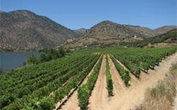 Weißweine aus Portugal