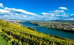 Weißweine aus Österreich