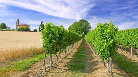 Französischer Weißwein