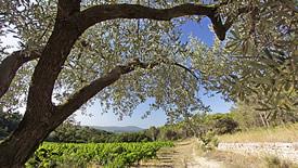 Rotweine aus dem Rhônetal