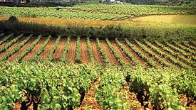 Rotweine aus Katalonien, Penedés