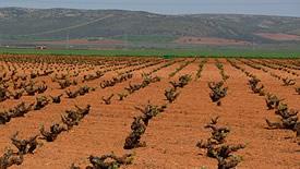 Rotweine aus La Mancha & Valdepeñas
